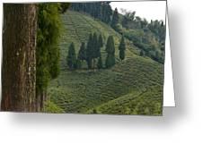 Tea Garden In Darjeeling Greeting Card by Atul Daimari