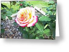 Tea Rose For A Lady Greeting Card