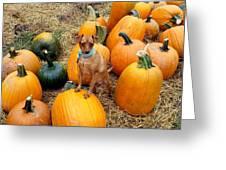Teagun Rose Pumpkin Patch 3 Greeting Card