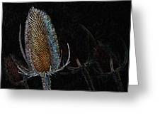 Teasel Glow Greeting Card