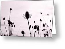 Teasels In A French Field  II Greeting Card
