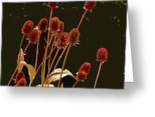 Teazels In A Secret Garden  Greeting Card