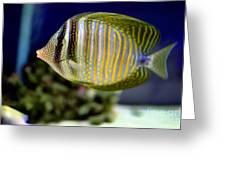Technicolor Fish Greeting Card
