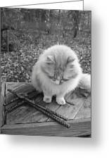 Ted In Black And White Greeting Card