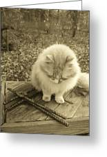 Ted In Sepia Tone Greeting Card