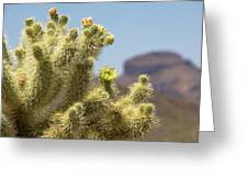 Teddy Bear Cholla Cactus With Flower Greeting Card