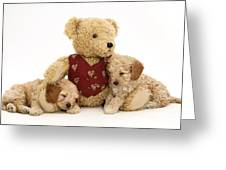 Teddy Bear With Puppies Greeting Card by Jane Burton