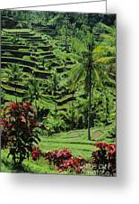 Tegalalang, Bali Greeting Card