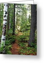 Temagami Island Forest I Greeting Card