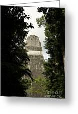 Temple In The Trees Tikal Guatemala Greeting Card