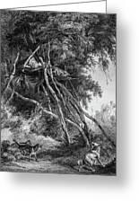 Temporary Tree Dwelling Greeting Card