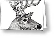 Ten Point Buck Greeting Card