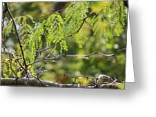 Tender Green Greeting Card