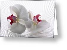 Tender Orchid Greeting Card