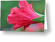 Tender Tears Greeting Card