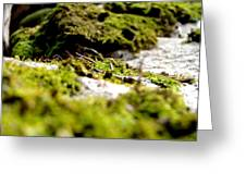 Tennesee Moss Greeting Card