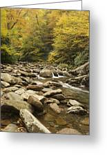 Tennessee Autumn Stream 6059 Greeting Card