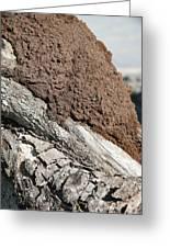 Termite Nest Greeting Card