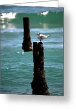 Tern Gulfstream Florida Greeting Card