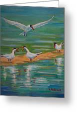Terns On Sandbar Greeting Card