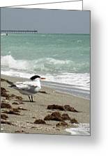Tern's View Gp Greeting Card