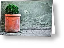 Terracotta Flower Pot On Sidewalk Greeting Card