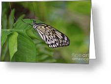 Terrific Capture Of A Paper Kite Butterfly On A Leaf Greeting Card