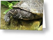 Tess The Map Turtle #2 Greeting Card