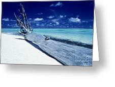 Tetiaroa Driftwood Greeting Card