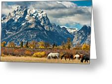 Teton Horses Greeting Card