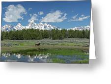 Teton Reflection With Buffalo Greeting Card