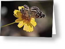 Texan Crescent Butterfly On Marigold-img_1348-2016 Greeting Card