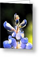 Texas Blue Bonnet Impressions 1 Greeting Card