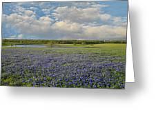 Texas Bluebonnet Bliss Greeting Card