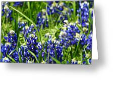 Texas Bluebonnets 002 Greeting Card