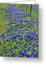 Texas Bluebonnets 004 Greeting Card