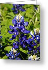 Texas Bluebonnets 005 Greeting Card