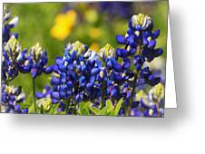 Texas Bluebonnets 006 Greeting Card