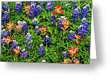 Texas Bluebonnets And Indian Paintbrush Greeting Card