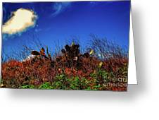 Texas Cactus Greeting Card