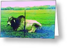 Texas Cattle Verde Greeting Card
