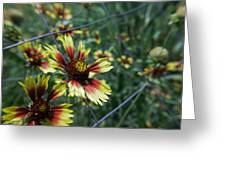 Texas Dresses Up    Greeting Card