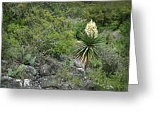 Texas Hill Country Yucca Greeting Card