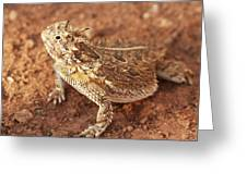 Texas Horned Lizard Greeting Card