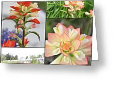 Texas Indian Paintbrush Collage Greeting Card