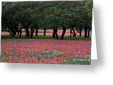 Texas Live Oaks Surrounded By A Field Of Indian Paintbrush And Bluebonnets Greeting Card