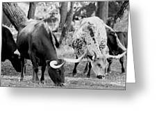 Texas Longhorn Steer In Black And White Greeting Card