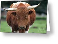 Texas Longhorn Greeting Card by Robert  Torkomian