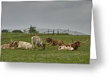Texas Longhorns And Wildflowers Greeting Card