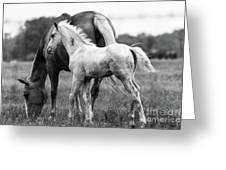 Texas Ranch  Greeting Card